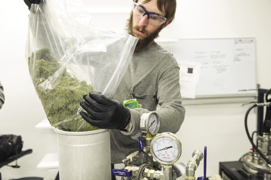 A worker at The Clinic, a marijuana production facility in Denver, loads marijuana into the extraction column of an extractor machine.