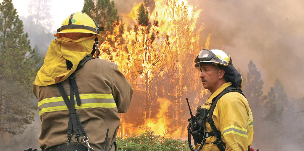 Firefighters prepare to attack a wildfire which a tree if engulfed in flames in the background.