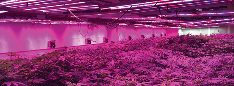 Marijuana grow & extraction facility